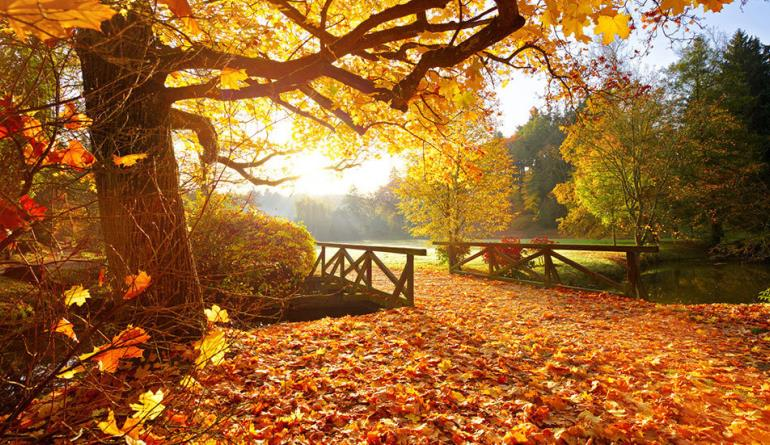 Turn those autumn leaves into good fertilizer - check it out!